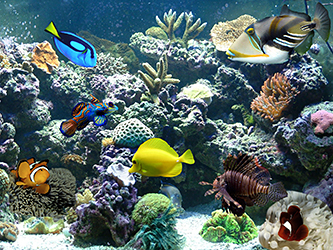An introduction to saltwater aquariums tc pet stop for Live saltwater fish