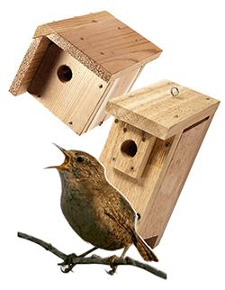birdhouse plans house wren