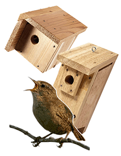 birdhouse plans for wrens